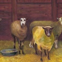 sheep by Mary Hollinger